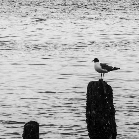 Chilling out. Maxing. Relaxing. All cool. Black & White Things With Wings  Nature EyeEm Charleston