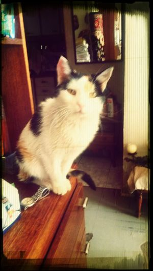 """El amor incondicional de un animal,nos hace reflexionar...vivimos mas que ellos.. y nunca,lograremos el amor que nos cautiva para inmortalizar a esta gata """"cachupina"""".linda."""