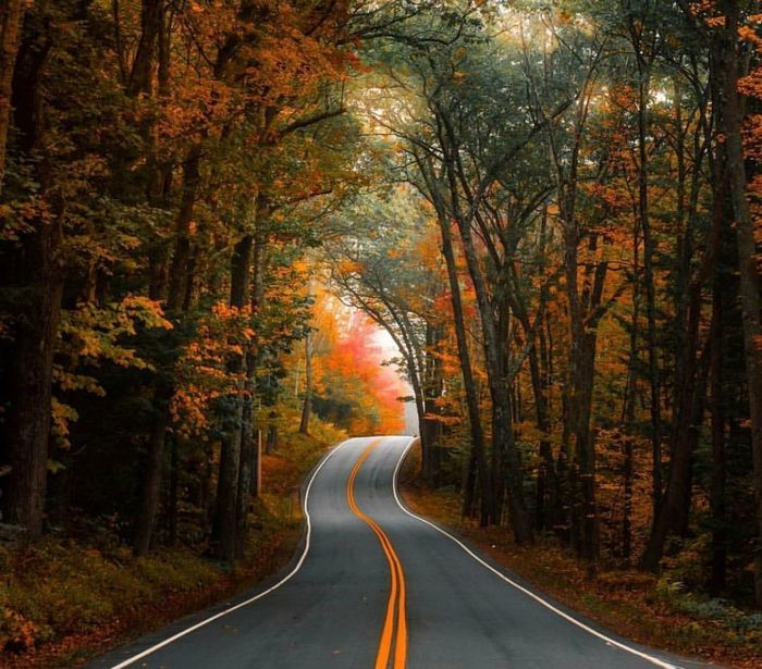 Road Forest Tree Autumn Winding Road WoodLand Landscape Leaf No People Outdoors Red Nature Mountain Day Beauty In Nature EyeEm Selects