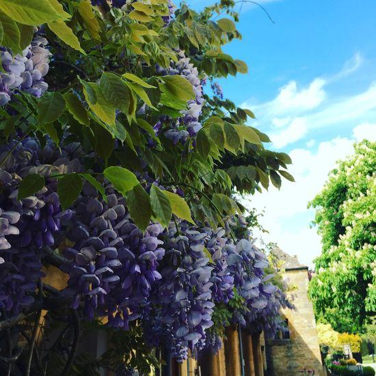United Kingdom Cotswolds Broadway Flower