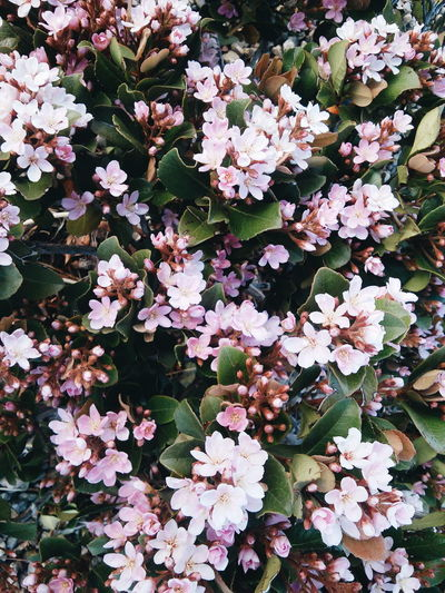 flowers are lovely. 💗 // picture credit to me. First Eyeem Photo