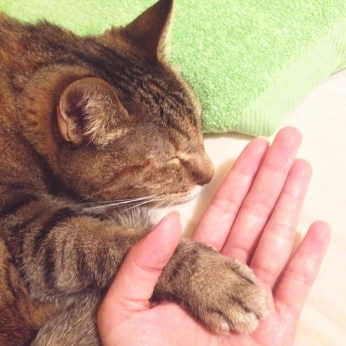 Cat Paw Give Me Your Paw Shake Hand Sleep In Bed