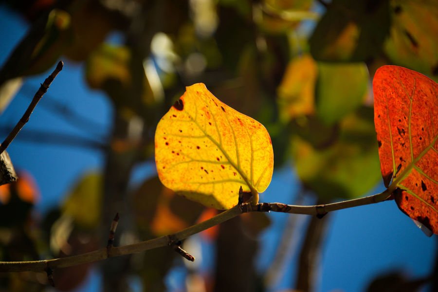 Just a Leaf Golden Leaf Signs Of Autuum Signs Of Fall Leaf Leaf 🍂 Leafphotography Leafs Colors Leaf Turns Red And Yellow Leafs Photography Leaf Pattern Leafe Leafromtheback Leaf Fantasy Leafmania Leaves 🍁 Leaves And Branches Leaves Leaves And Sky Leaveschangingcolors