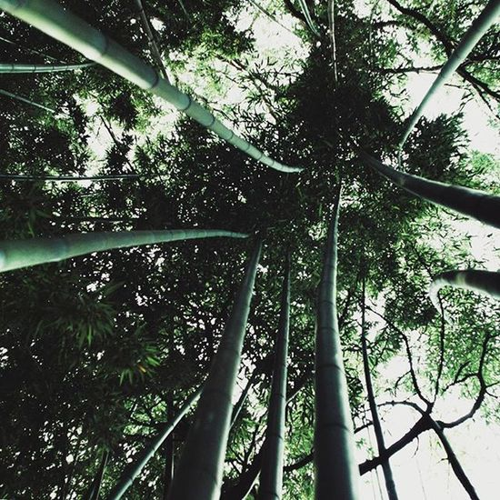 Bamboo is the fastest growing plant on the planet. It can grow 3 feet in height in 24 hours.