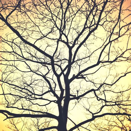 Abstract, cool tree in Norwalk, CT. Tree Bare Tree Abstract IPhone7Plus Norwalk CT Snapseed Golden Hour Staygoldenponyboy