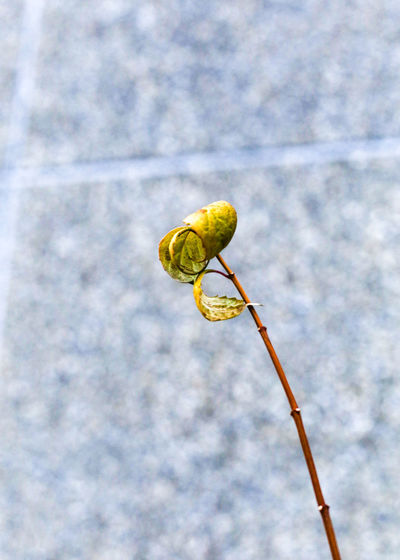 Withered Plant Green Leaves Beauty In Nature Brown Leaves And Green Leaves Focus On Foreground Fragility Nature Nature In Wintertime Outdoors Withered Beauty Shades Of Winter