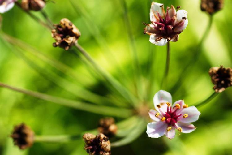 Close-up of flowers growing in garden