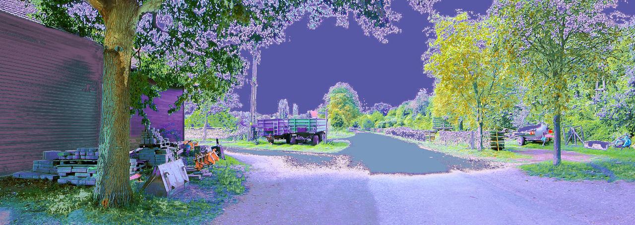 Walkway along trees