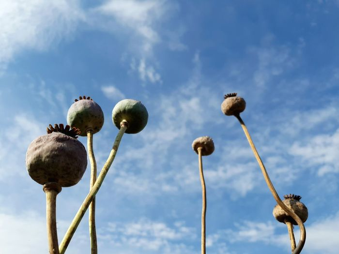 Low angle view of fruits on plant against sky