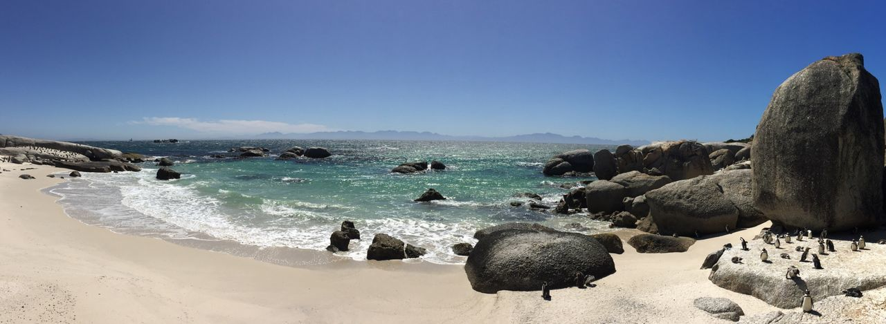 Penguin Pinguin Penguins Panorama Panoramic Panoramic Photography South Africa Beach Beachphotography Beach Photography Ocean View Ocean Sunshine Feel The Journey Original Experiences No Filter Showcase June Landscapes African Landscape