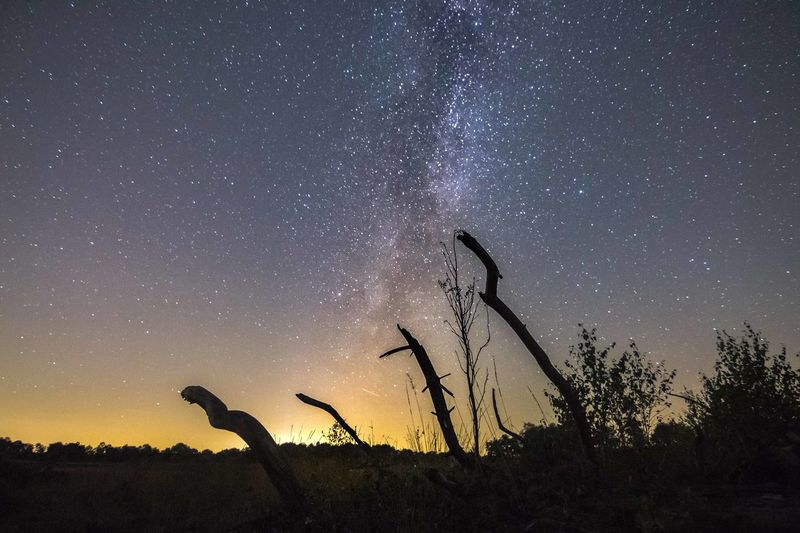 Low Angle View Of Silhouette Plants Against Star Field