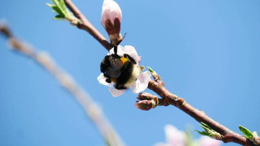 Low angle view of bumblebee pollinating on flower
