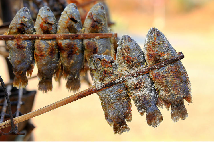 Close-up of dried fish hanging on barbecue grill