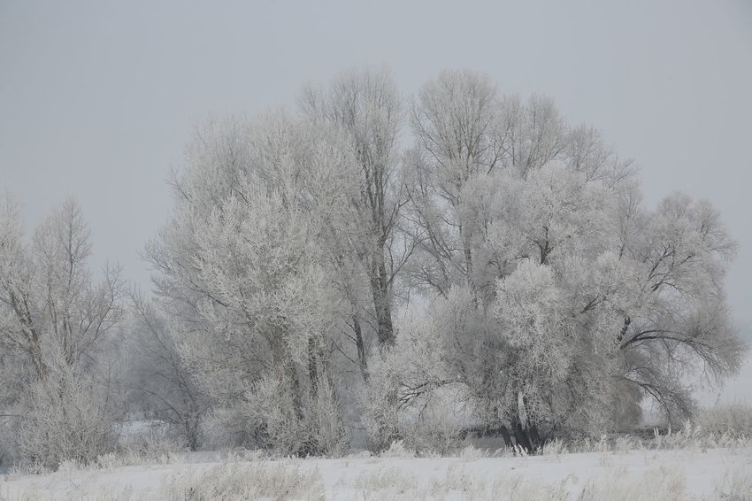 Bare Tree Beauty In Nature Clear Sky Cold Temperature Day Grass Landscape Nature No People Outdoors Plant Sky Snow Tranquility Tree Winter