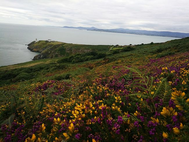 Nature Enjoying The Sights Relaxing Taking Photos Nature Photography First Eyeem Photo 43GoldenMoments Take A Break Nature Walking Enjoying The Sights Ireland🍀 Howth Ireland Irelandinspires Ireland Lovers Irelanddaily Ireland Landscapes Flowers, Nature And Beauty Flowers Flower Photography Flowermagic Wildflowers Wildflowers In Bloom Colour Of Life