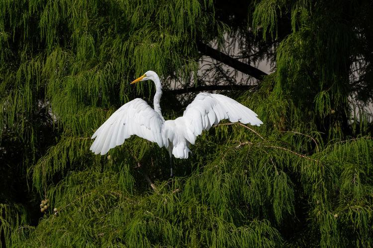 Bird flying over green plants
