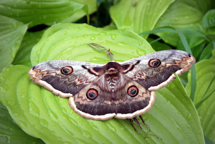 Close-up of butterfly on green leaves