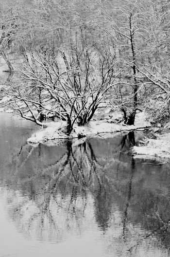 Reflection of bare tree in water