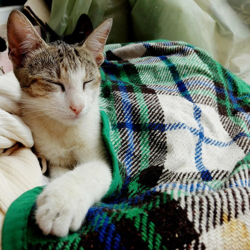 EyeEm Selects Animal Themes Domestic Cat Pets Blanket Domestic Animals Eyeem Market Huaweiphotography WOLFZUACHiV Photography Veronica Ionita WOLFZUACHiV Photos Wolfzuachiv On Market Cats Cat No People No Person No Model No Recognizable People No Real People No Release Needed No Peoples No Persons No Models Cats Only