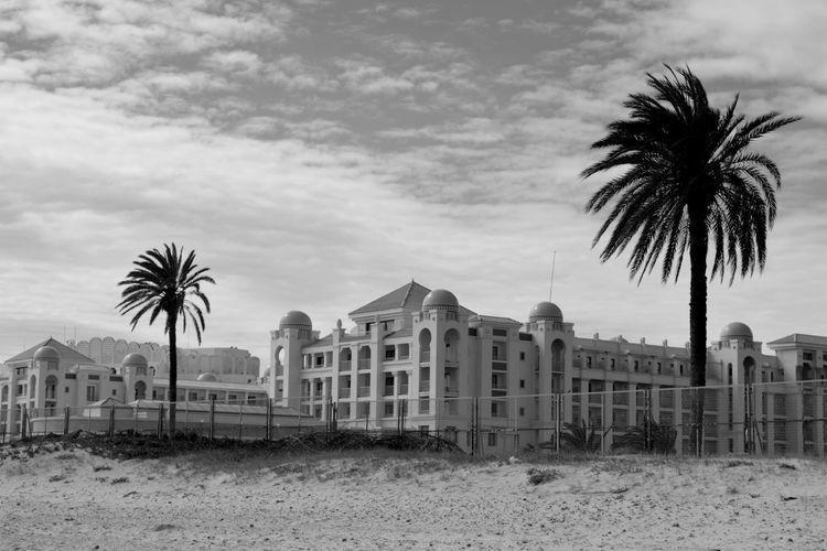 Palm trees by beach against sky