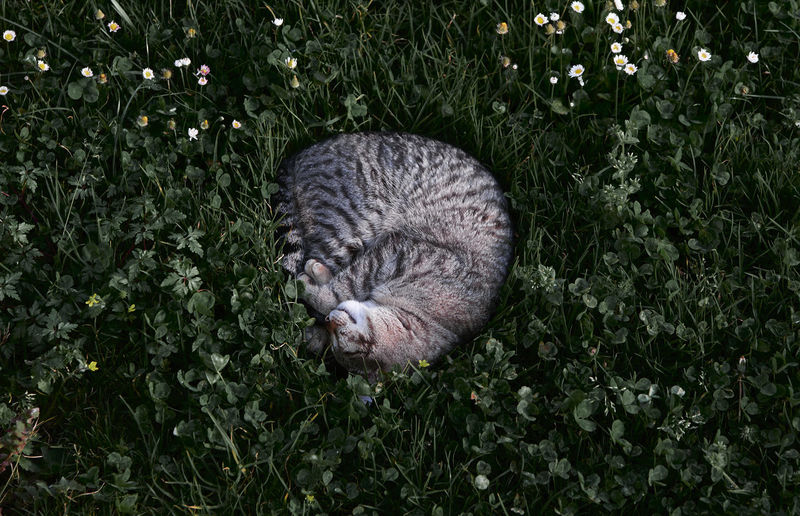 High angle view of cat on grass