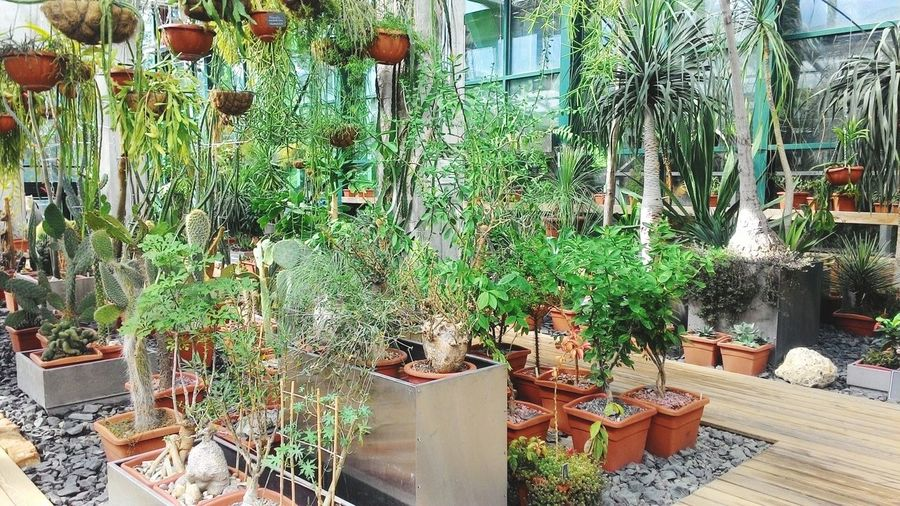 Potted plants in greenhouse