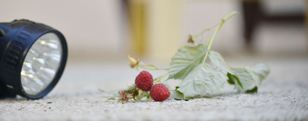 Close-up of raspberries and flashlight on field