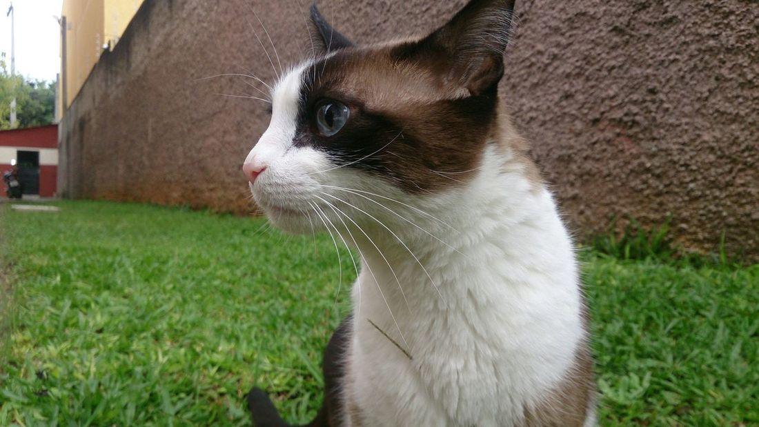 Cute Pets My Cat! respirando ar puro da manha