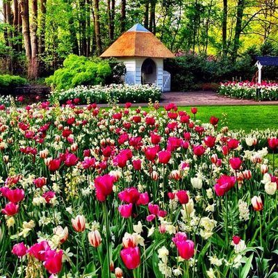 More #tulips ??? #tulipfieldsexperience #igersholland #dutch #jj_forum #flower #ubiquography #jj #holland #keukenhof #tulip Tulipfieldsexperience Flower Holland Tulip Tulips Dutch Jj  Keukenhof Jj_forum Ubiquography Igersholland Theflowerofgardens