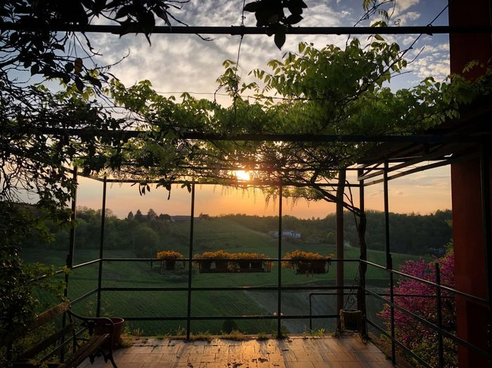 Plant Tree Sky Nature Fence No People Outdoors Sunset Barrier Cloud - Sky