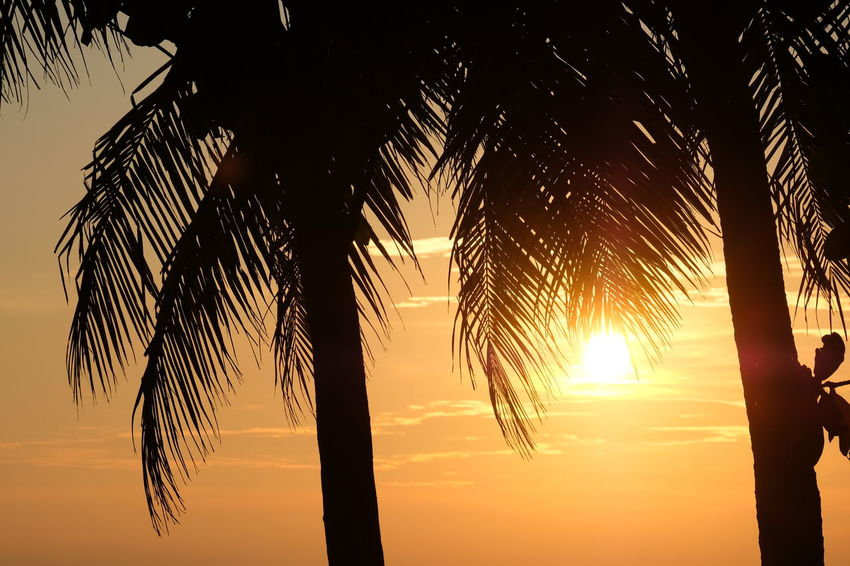 Beauty In Nature Coconut Palm Tree Growth Idyllic Low Angle View Nature No People Outdoors Palm Leaf Palm Tree Plant Scenics - Nature Silhouette Sky Sun Sunlight Sunset Tranquil Scene Tranquility Tree Tropical Climate Tropical Tree