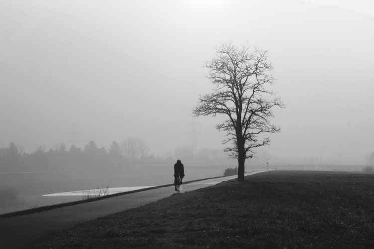 Fog Tree Foggy Nature Winter Landscape Weather One Person Road Cold Temperature Outdoors