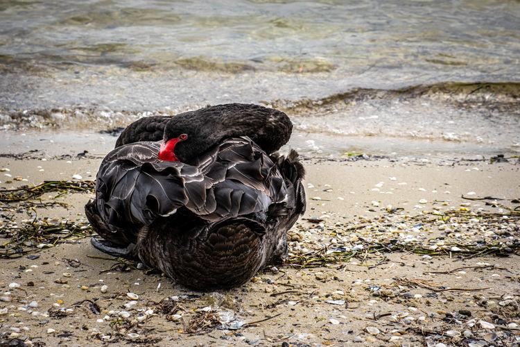 Black bird on a beach