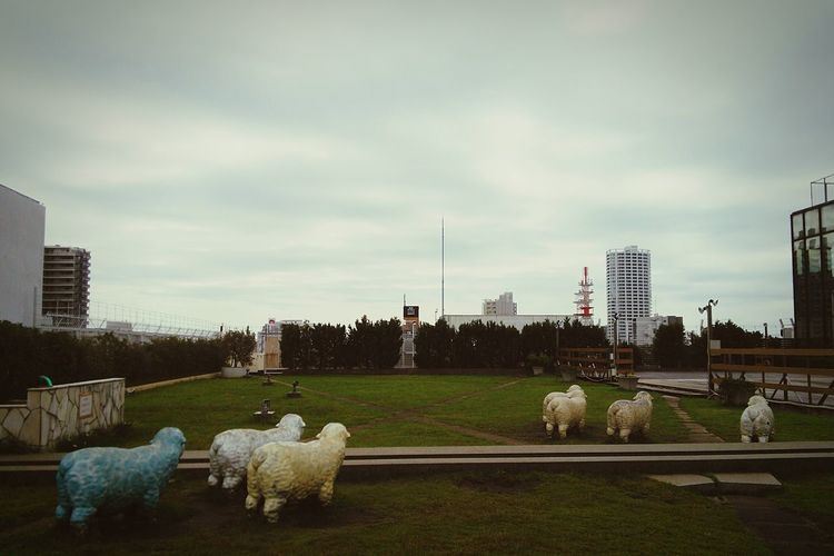 Hello World Sky And Clouds Autumn2015 Sheeps Department Store
