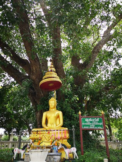 Ayutthaya | Thailand Bodhi Tree Buddha Image Golden Belief Buddha Statue Buddhism Greenery Low Angle View No People Offerings Outdoors Place Of Worship Plant Religion Sculpture Spirituality Statue Tree