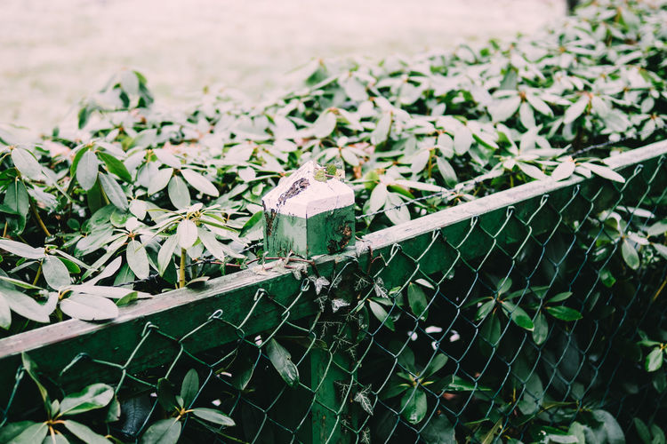 all things green Beauty In Nature Close-up Day Fence Focus On Foreground Fragility Freshness Garden Green Growth Leaf Nature No People Outdoors Plant Plant Part VSCO