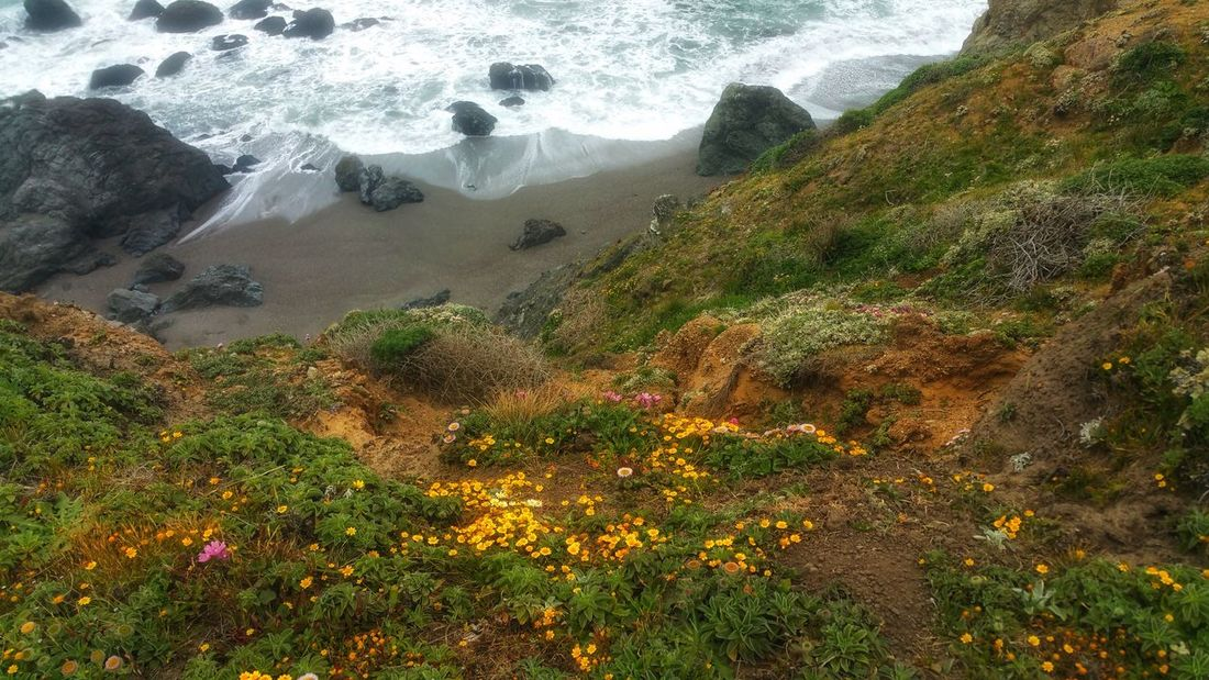 Aerial -Wildflowers to the end of the cliff. Waves crashing far below. Background Zen Copy Space Meditation Moment Beach Aerial Cliff Golden Red Lands End Yellow Dreams Overlapping Wildflowers Headland Water High Angle View Sky Foreground Rushing Scenic View Tranquil Scene Tranquility Calm Surf Wave Countryside Idyllic Shore