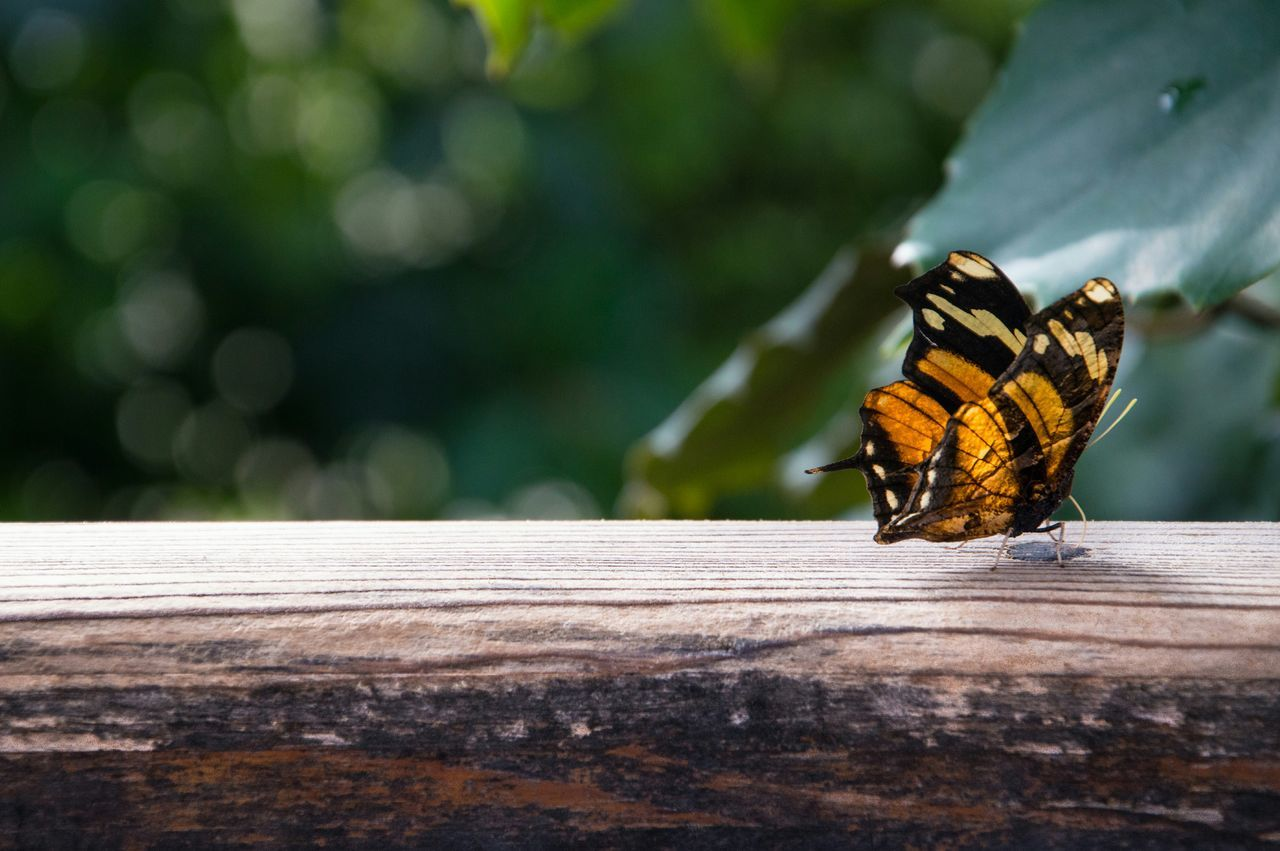 Close-Up Of Butterfly On Log Outdoors