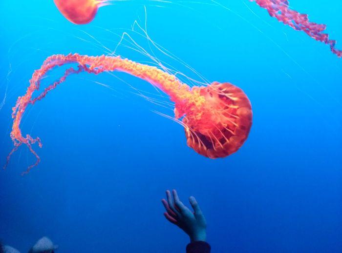 Jelly Jellyfish Aquarium Fish
