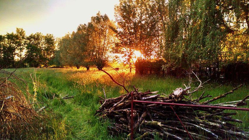 Hidden Sunset Sunset No People Nature Pfingsten Wipshausen