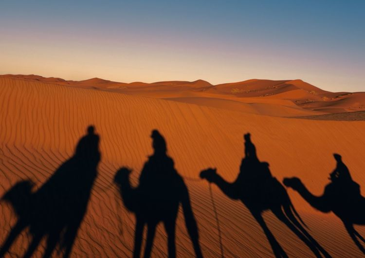 Shadows of camels on sand