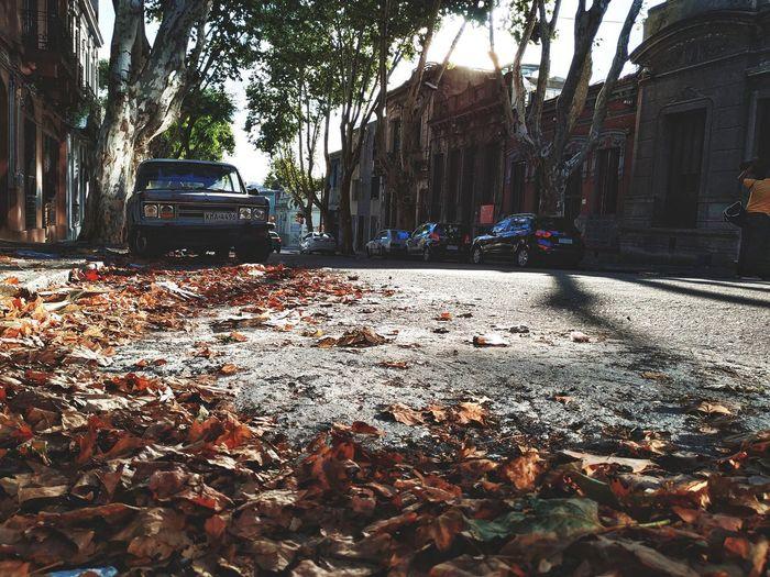 hojas de ciudad