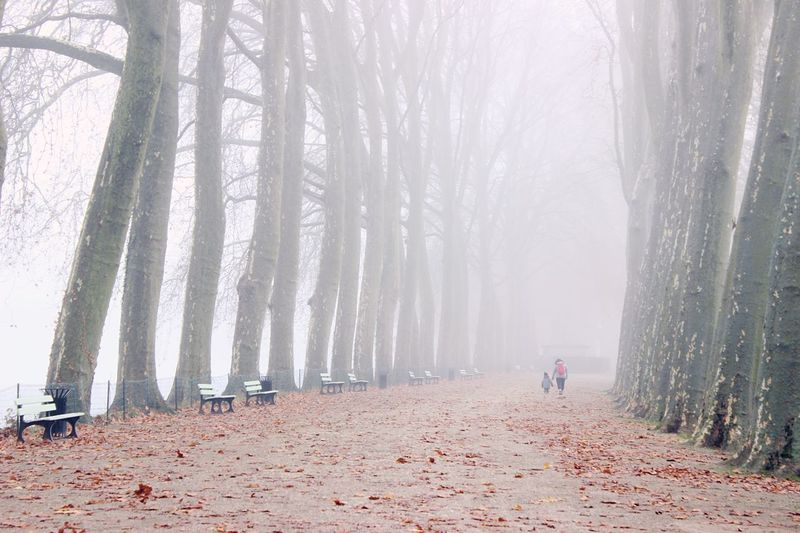 Walkway amidst bare trees during foggy weather