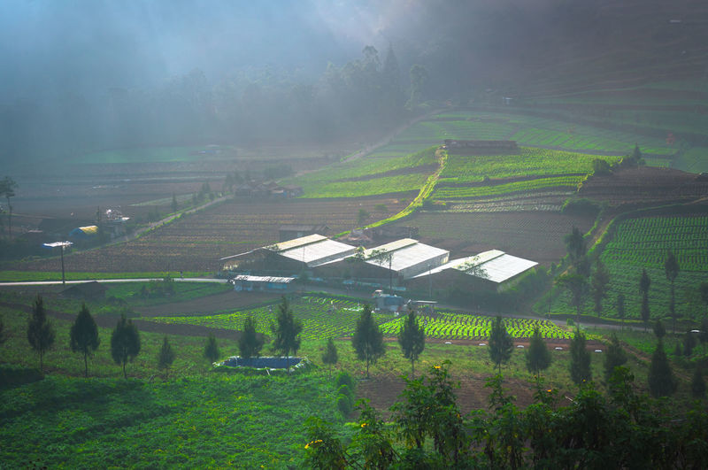 green valley Agriculture Irrigation Equipment Field Grass Green Color Foggy Agricultural Field Rainy Season Plantation Fog Weather Terraced Field Monsoon Snowcapped Rain Mist Cultivated Land