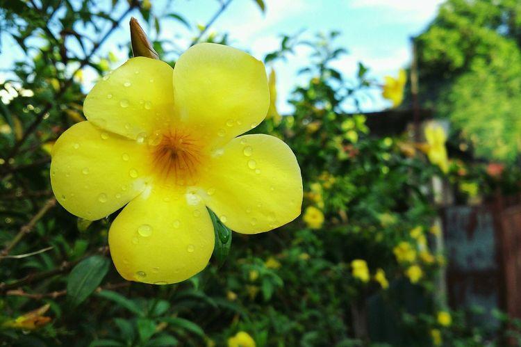 Macro Photography Mobilephotography Mobilephotographyph Plantography Xiaomimi4 MIphotography