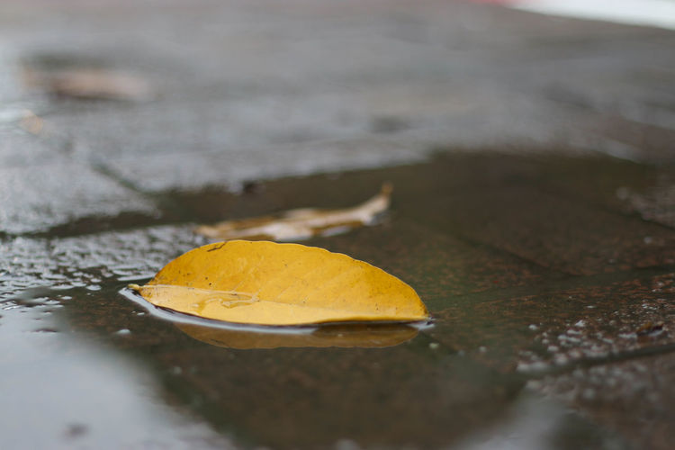 Autumn Beauty In Nature Close-up Day Fragility Freshness Horizontal Leaf Nature No People Outdoors Water Wet