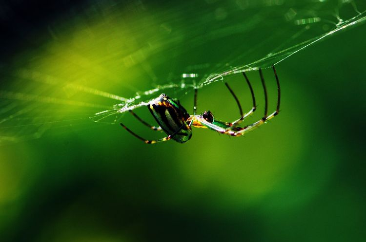 阳光下的蜘蛛 微距 昆虫 Shades Of Winter Spider Web Spider Green Color Animals In The Wild Insect Web Nature