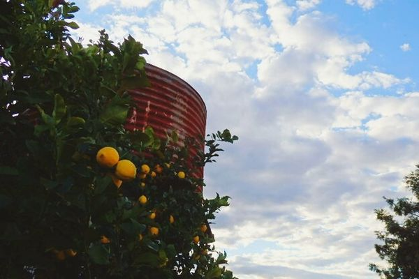 Watertank Lemontree Lemons Clouds And Sky Clouds Rusty Rusty Things Blue Sky Millmerran Australia Country Life