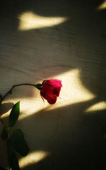 A rose and