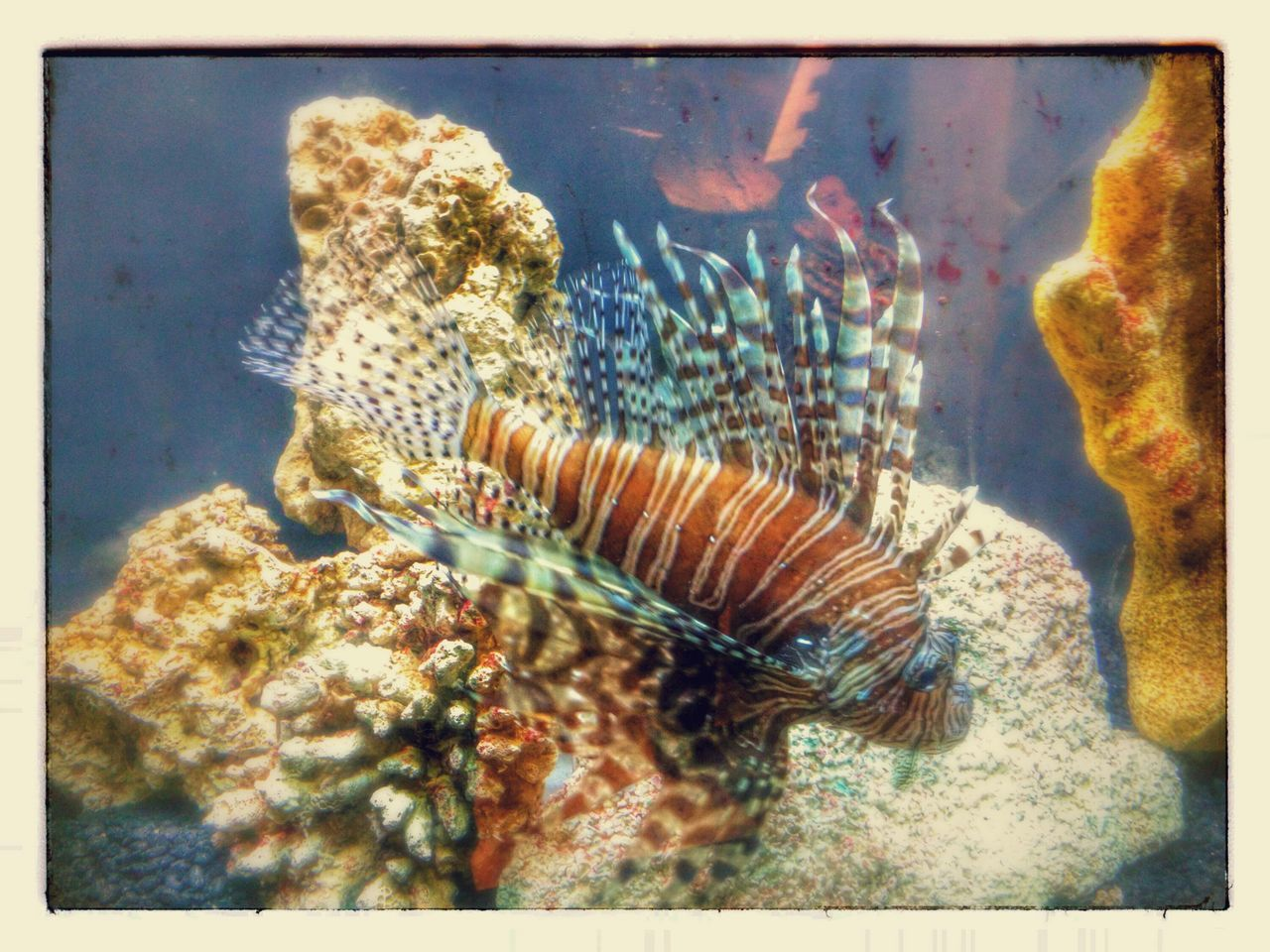 animal themes, animals in the wild, sea life, water, no people, swimming, underwater, fish, one animal, nature, close-up, day, indoors, undersea, aquarium